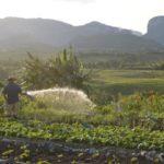 Farming Trip To Cuba
