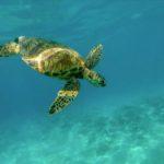 Cuba Sea Turtle Expedition