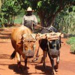 Cuba Farm Tour